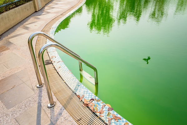 Why Swimming Pools Turn Green – And How to Fix It